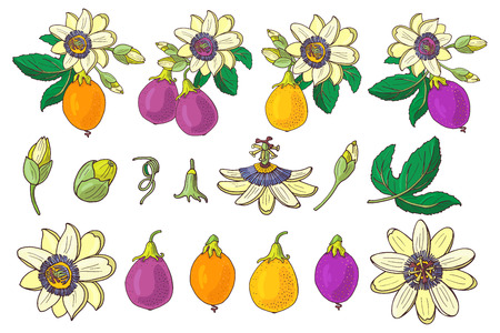 Set of Passionflower(passiflora,purple,violet,yellow tropical fruit) on a white background.Isolated exotic flower,bud and leaf.Summer vector illustration for print textile,fabric,wrapping paper.