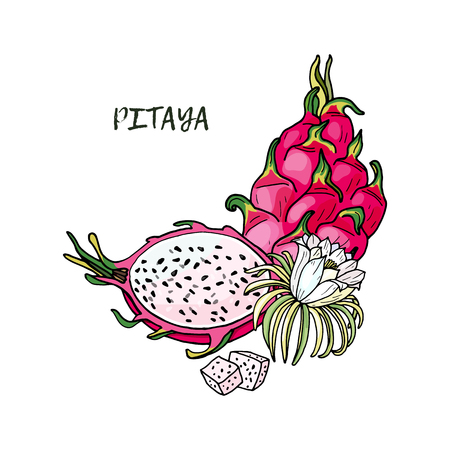 Pink pitaya.Summer tropical food for healthy lifestyle.Red dragon whole fruit and half,flower.Vector hand drawn illustration.Isolated sketch on a white background.
