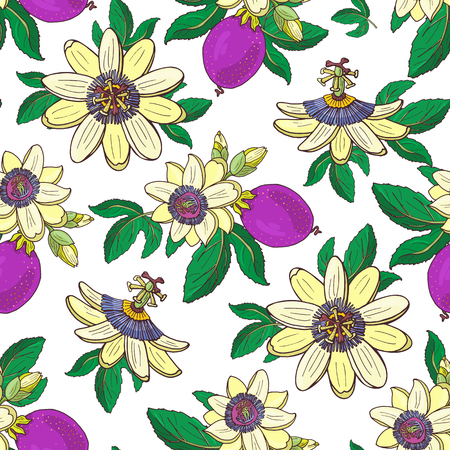 Passionflower passiflora,passion purple fruit on a white background.Floral seamless pattern.Big bright exotic Maracuja flowers,bud and leaf.Summer vector illustration for print textile,fabric.