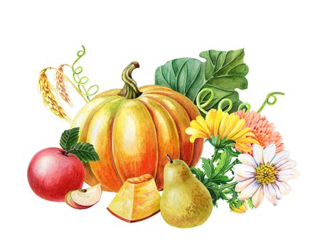 Orange pumpkin,Red apple,pear.Watercolor illustration on white background. Autumn harvest.Fresh vegetarian food
