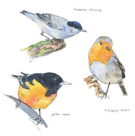ornithology: hand drawn set of watercolor birds on white background