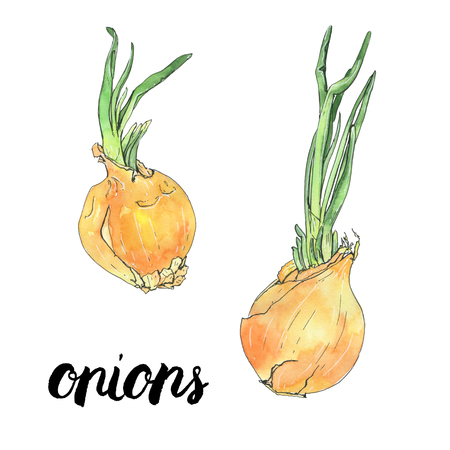 hand drawn watercolor vegetables onions with handwritten words on white background