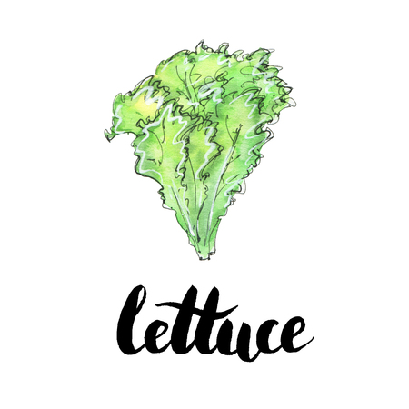 hand drawn watercolor vegetables lettuce with handwritten words on white background