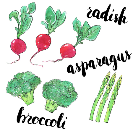 hand drawn set of watercolor vegetables radish asparagus broccoli with handwritten words on white background Stock Photo