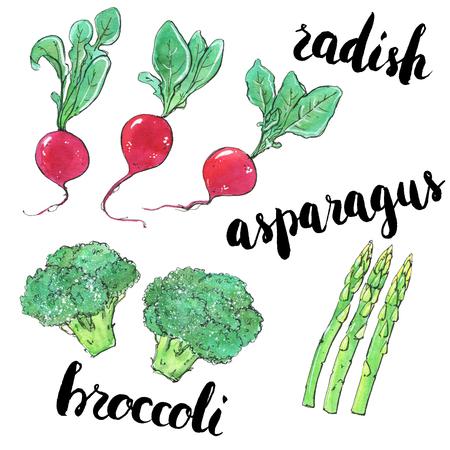 hand getrokken set van aquarel groenten radijs asperges broccoli met handgeschreven woorden op witte achtergrond Stockfoto