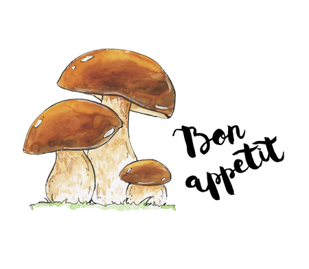 cep: hand drawn watercolor mushrooms Boletus edulis penny bun cep porcino porcini with handwritten words on white background