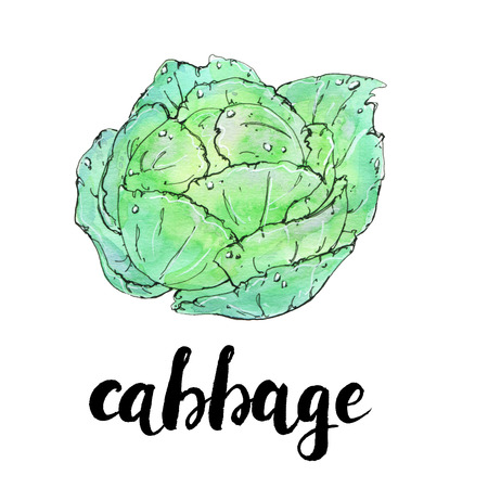 hand drawn watercolor vegetables cabbage with handwritten words on white background