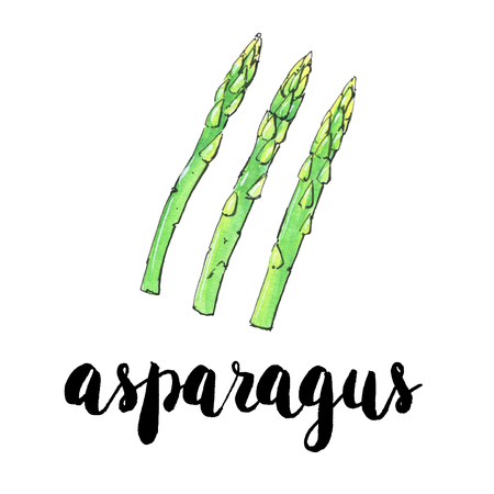 hand drawn watercolor vegetables asparagus with handwritten words on white background Stock Photo