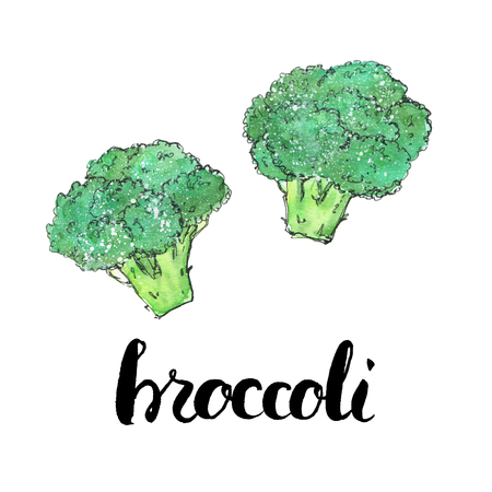 hand drawn watercolor vegetables broccoli with handwritten words on white background
