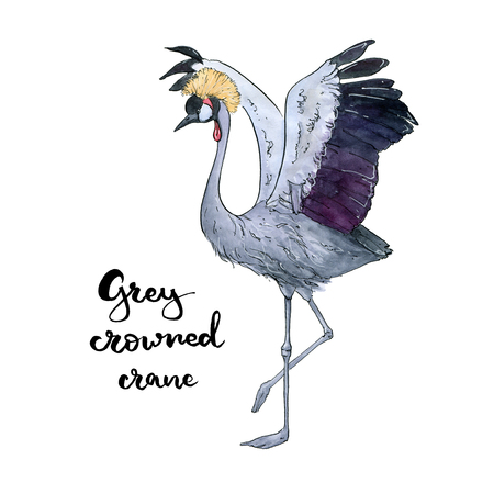 hand drawn set of watercolor isolated bird Grey Crowned Crane with handwritten words lettering on white background Stock Photo
