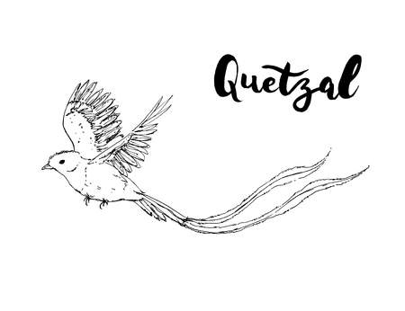 hand drawn graphic isolated bird Quetzal with handwritten words lettering on white background Stock Photo