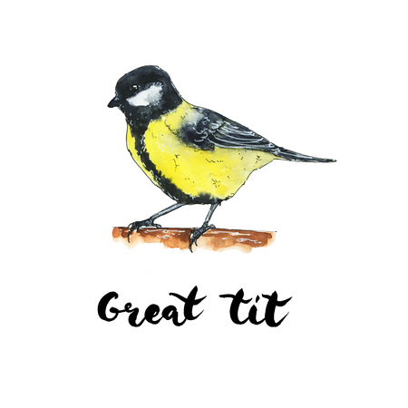 hand drawn set of watercolor isolated bird great tit on white background Stock Photo