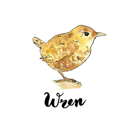 hand drawn set of watercolor isolated bird wren  on white background with handwritten words Stock Photo