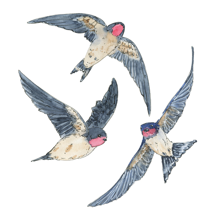 hand drawn set of watercolor isolated bird swallow on white background 스톡 콘텐츠
