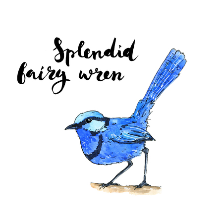 hand drawn set of watercolor isolated bird Splendid Fairy Wren on white background with handwritten words Stock Photo