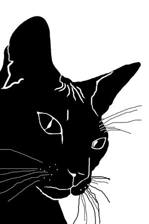 sphinx: silhouette of the head of a cat, a black silhouette, white background, pet