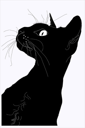 black cat: silhouette of a cat, a silhouette of the head, the silhouette of the Sphinx, the big mustache, black silhouette, domestic cat, a pedigreed cat