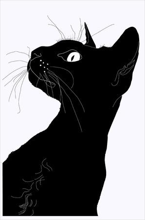 gato negro: silueta de un gato, una silueta de la cabeza, la silueta de la Esfinge, el gran bigote, silueta negra, gato dom�stico, un gato pedigreed Vectores