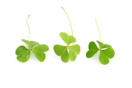 shamrocks for St. Patrick's day Stock Photo - 807721