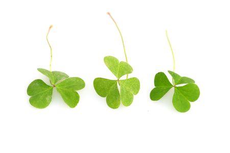 patric: shamrocks for St. Patricks day
