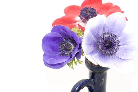 Flower : anemones photo