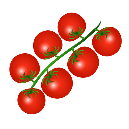 Vector illustration of a red cherry tomatoes on a branch isolated on a white background.