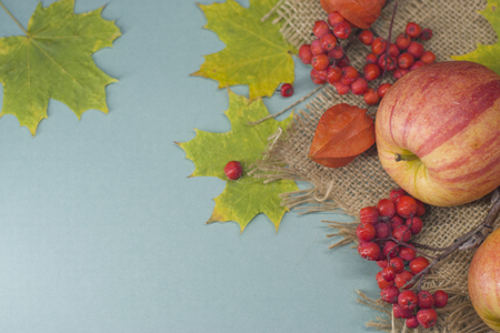 Rowan berries and apples and orange physalis and green maple leaves on a light blue background and burlap. Banco de Imagens