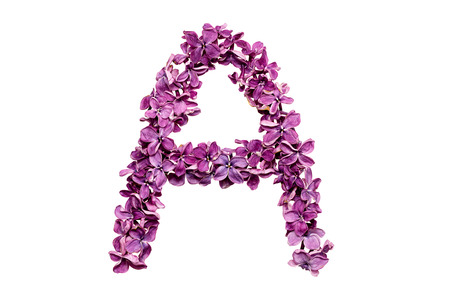 qwerty: Flower letter lilac or purple color isolated on white background. Letter A