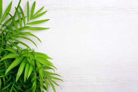 Tropical palm leaves on white wooden background with free copy space for text. Creativity summer botanical flat lay. Top view. 스톡 콘텐츠 - 146385150