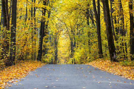 Autumn road in the forest, landscape. Autumn forest. Autumn background with copy space. Banque d'images