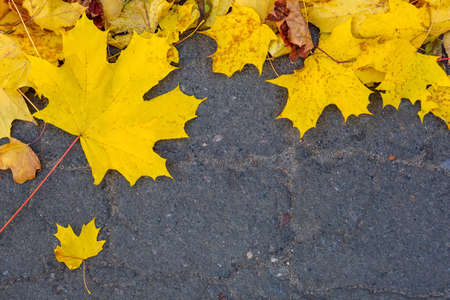 Autumn yellow fallen maple leaves on asphalt. Gray background for text. Copy space. Top view. Banque d'images