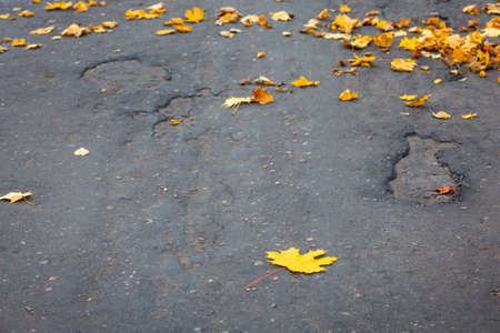 Autumn yellow fallen maple leaves on asphalt. Gray background for text. Copy space.