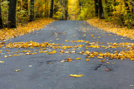 Autumn road in the forest, landscape. Autumn background with copy space. Banque d'images