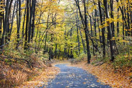 Autumn road landscape. Autumn forest. Autumn background with empty copyspace for text