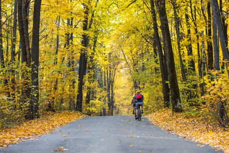Autumn road in the forest, landscape. Autumn forest. A walk on the bike. Autumn background copy space.