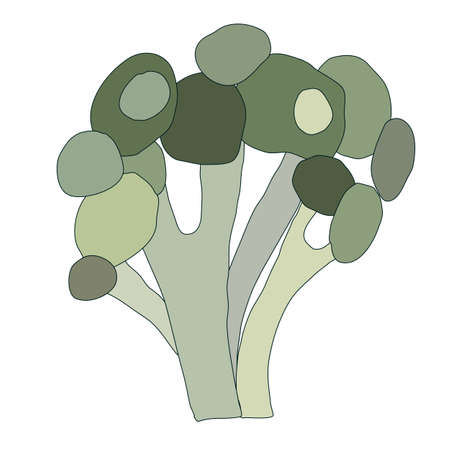 vector color broccoli isolated on white background