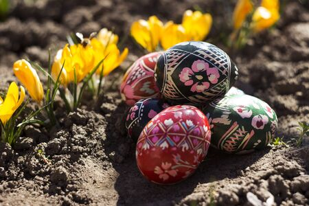 Painted Easter eggs lie on the ground next to the yellow Crocus. Spring, holiday concept Фото со стока