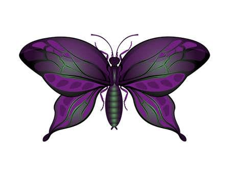 Purple butterfly Illustration