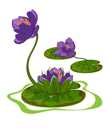 Three purple flowers of water lily on the water