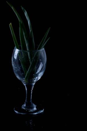 cebollin: Primavera cebolla verde con cebolleta - portarretrato
