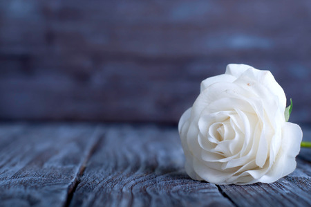Three White Roses on the Wooden Table photo