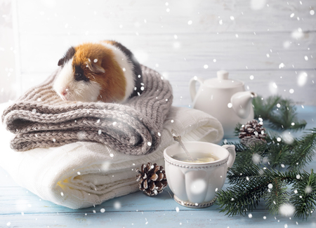 New years eve hamster with tea and Christmas tree on a warm plaid