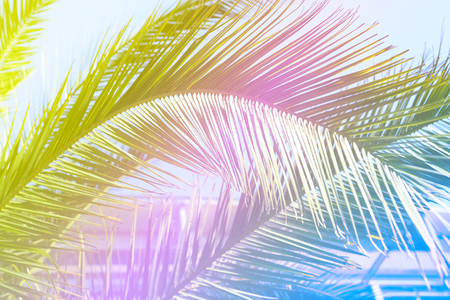 colorful trendy design palm leaf on a yellow, pink and blue duotone summer background