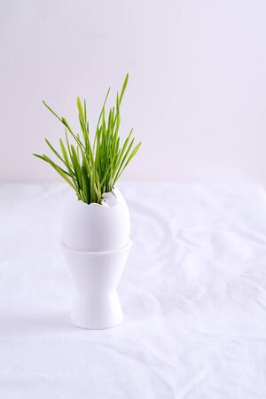 Easter grass growing in egg shell on a egg tray on white table. Hydroponic concept