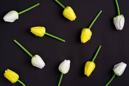 Congrats postcard from freshly picked tender white and yellow tulips on a black background. Natural holiday backdrop. Flat lay.