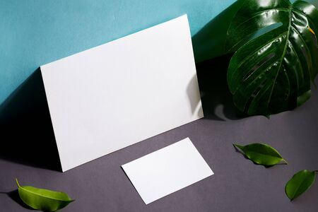 Blank stationery set business cards and brochure on duotone background with leaf and shadows Standard-Bild - 150452488