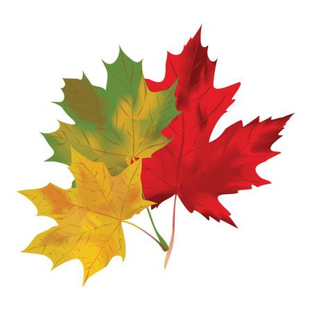 Conjunto de iconos de otoño Caen las hojas de recogida símbolo Naturaleza vectorial aislados en fondo blanco Foto de archivo - 29828390