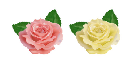 freshens: realistic rose on a white background vector