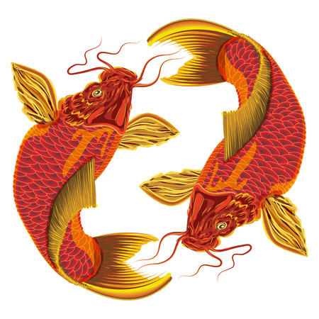 china art: Japanese carp on a white background  Vector