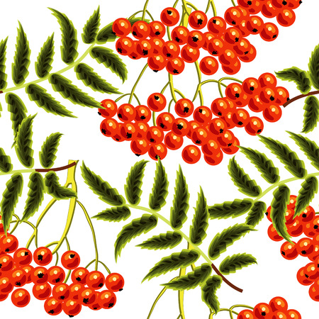 Red rowan berries seamless vector pattern. Template for design Vector